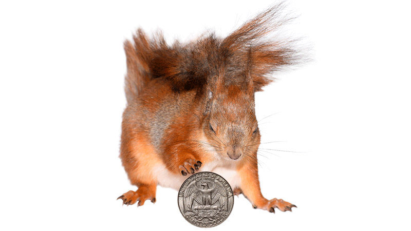 Blog-Squirrel-Away-Money-in-Fall.png